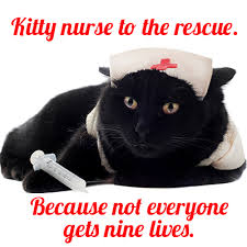 nurse kitty
